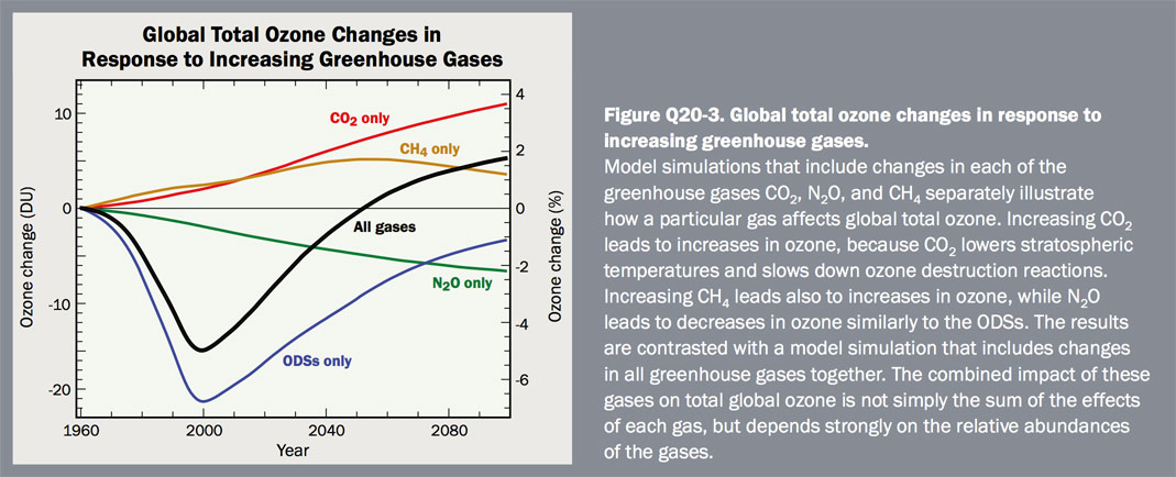 Figure Q20-3 Global total ozone changes in response to increasing greenhouse gases