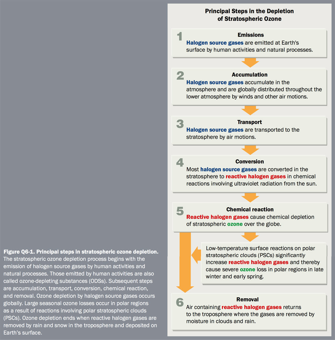 Figure Q6-1 Principle steps in stratospheric ozone depletion