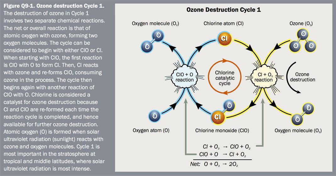 Figure Q9-1 Ozone destruction Cycle 1